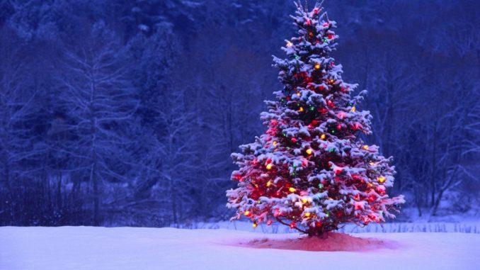 Immagini Piu Belle Di Natale.A Umbriatico Concorso Fotografico L Albero Di Natale Piu